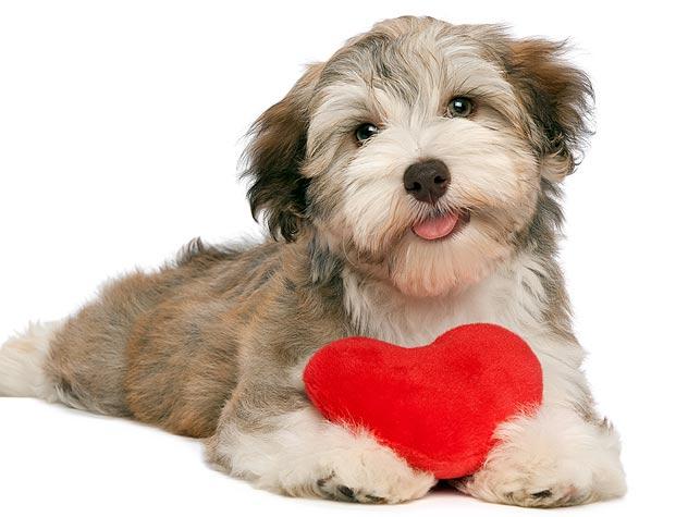 135137092-dog-valentines-day-date-632x475